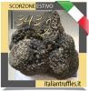 Scorzone Truffle